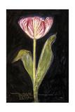 Twilight Tulip Premium Giclee Print by Maret Hensick