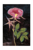 Twilight Rose Premium Giclee Print by Maret Hensick