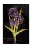 Twilight Iris Premium Giclee Print by Maret Hensick
