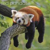 Red Pandas - 2016 Calendar Calendarios
