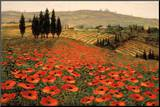 Hills of Tuscany I Mounted Print by Steve Wynne