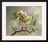 Apple Blossoms and a Hummingbird, 1875 Framed Giclee Print by Martin Johnson Heade
