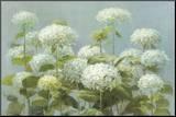 White Hydrangea Garden Mounted Print by Danhui Nai