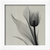 Tulip Prints by Marianne Haas