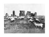 Sheep at Stonehenge in England, 1933 Photographic Print by  Scherl