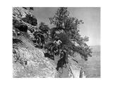 Scherl - Esel im Grand Canyon, 1927 - Fotografik Baskı