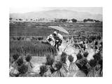 Rice Farmers in China, 1928 Photographic Print by  Scherl