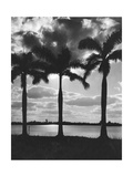 Hawaii, 1930 Photographic Print by  Scherl