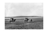 Caravan of Dromedarys in Turkey, 1960S Photographic Print by  Knorr & Hirth