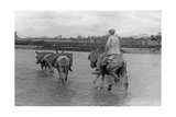 Man with Donkeys in Spain, 1934 Photographic Print by  SZ Photo