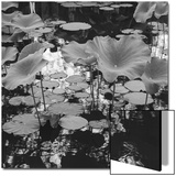 Lilies and Reflections Poster by Henri Silberman
