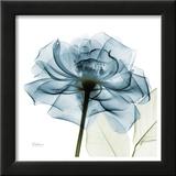 Blue Rose Prints by Albert Koetsier