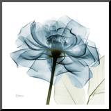 Blue Rose Mounted Print by Albert Koetsier