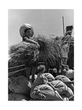 Junge Kolonistin in Italienisch-Libyen bei der Feldarbeit, 1930er Jahre Photographic Print by  SZ Photo
