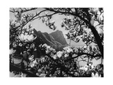 Flowers at the Lake Lucerne, 1934 Photographic Print by  Scherl