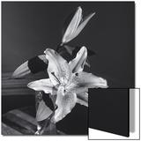 Lily Flower in Vase Poster von Henri Silberman