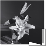 Lily Flower in Vase Art by Henri Silberman