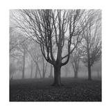 Trees in Fog, Prospect Park Photographic Print by Henri Silberman