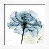 Blue Rose Poster by Albert Koetsier