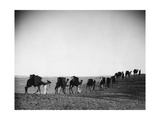 Caravan in the Desert, 1933 Photographic Print by  Scherl