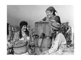 Grape Harvest in Switzerland, 1930 Photographic Print by  Scherl