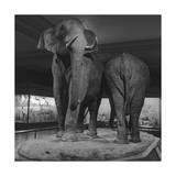 Elephant Display Photographic Print by Henri Silberman
