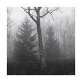 Trees in Fog, Pocano Mountains Photographic Print by Henri Silberman