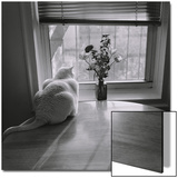 White Cat and Flowers by Window Posters by Henri Silberman
