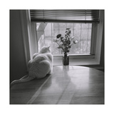 White Cat and Flowers by Window Photographic Print by Henri Silberman