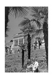 Spa Town Sukhumi in Abkhazia, 1941 Photographic Print by  Scherl