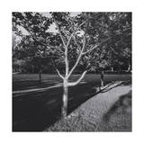 Cherry Tree and Shadows Photographic Print by Henri Silberman