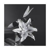 Lily Flower in Vase Photographic Print by Henri Silberman