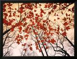 Red Maple and Autumn Sky Print by Raymond Gehman