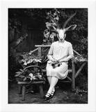 Adelaide Gazelling Art