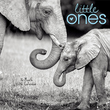 Little Ones - 2016 Calendar Calendars