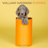 William Wegman Puppies - 2016 Calendar Calendars
