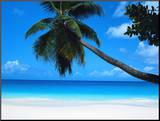 Beach and Palm, Seychelles Island Mounted Print