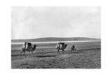Dromedar-Karawane in der Türkei, 1960er Jahre Photographic Print by  Knorr & Hirth