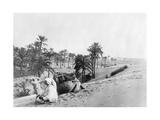 Dromedar in Tunesien, 1926 Photographic Print by Scherl Süddeutsche Zeitung Photo