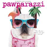 Pawparazzi - 2016 Calendar Calendars