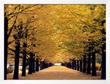 Path through The Trees Art