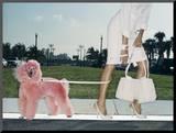 Pink Poodle Mounted Photo by Arthur Belebeau