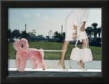 Pink Poodle Framed Photographic Print by Arthur Belebeau