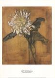 Chrysantheme (Großformat) Sammlerdrucke von Piet Mondrian