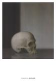 Schadel (Skull) Plakat af Gerhard Richter