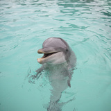 Dolphin Playing Fotografisk tryk