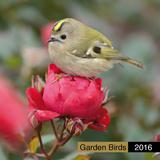 Garden Birds - 2016 Calendar Calendars