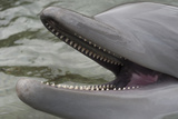 Dolphin Closeup Photographic Print by Mike Aguilera
