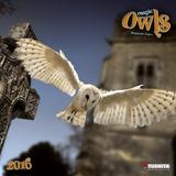 Magic Owls  - 2016 Calendar Calendars