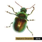 Nature's Diversity - 2016 Calendar Calendars